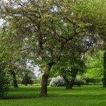 garden-1024x3601